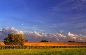 paysage flamand